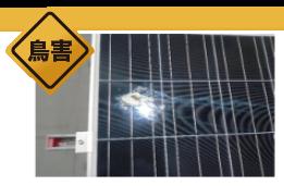 太陽光発電システム モジュールに落ちた鳥の糞